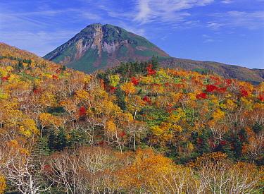 Mount Rausu-dake, active stratovolcano in autumn, Shiretoko Penninsula, Hokkaido, Japan  -  Masami Goto/ Nature Production