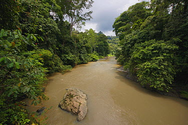 Sediment-laden river, Danum Valley, Malaysia  -  Hiroya Minakuchi