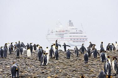 King Penguin (Aptenodytes patagonicus) group and cruise ship, Salisbury Plain, South Georgia Island  -  Konrad Wothe