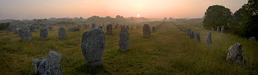 Standing stones at sunrise, Carnac, Brittany, France  -  Jim Brandenburg