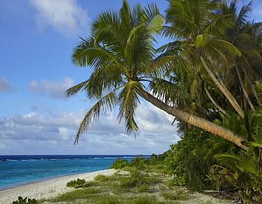 Palm trees on Ritidian Beach, Guam  -  Tim Fitzharris