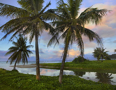 Palm trees, Asan Beach, War in the Pacific National Historic Park, Guam  -  Tim Fitzharris