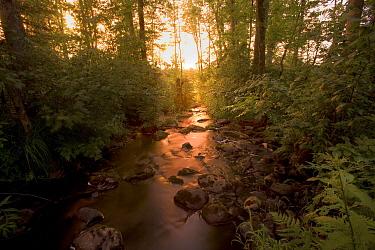 Judd Creek, Northwoods, Superior National Forest, Minnesota  -  Jim Brandenburg