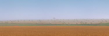 Hay bales on the prairie, North America  -  Jim Brandenburg