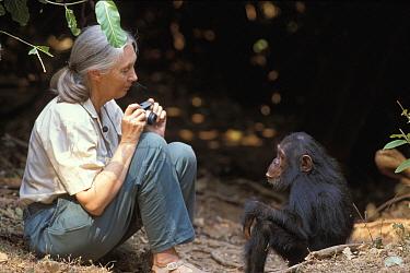 Eastern Chimpanzee (Pan troglodytes schweinfurthii) named Gaia and Jane Goodall, Gombe National Park, Tanzania  -  Michel Gunther/ Biosphoto