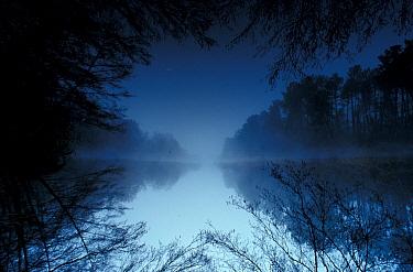 Lake at dawn, Landes De Gascogne Regional Natural Park, France  -  Bernard Dubreuil/ Biosphoto