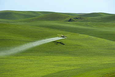 Wheat (Triticum sp) field sprayed with pesticides by airplane on loess hills in Palouse County, Oregon  -  Klein and Hubert