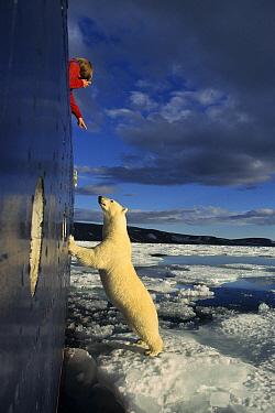 Polar Bear (Ursus maritimus) and tourist boat, Spitzbergen, Norway  -  Klein and Hubert