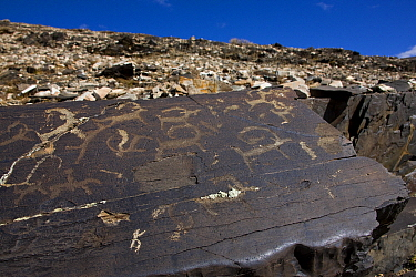 Extraction of plate of rock engravings, Mongolia  -  Klein and Hubert