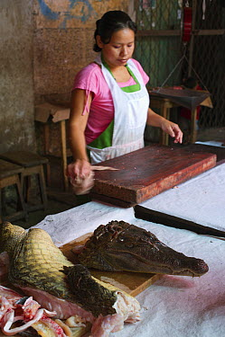 Caiman (Caiman sp) being sold for meat, Belen Market, Iquitos, Peru  -  David Tipling/ Biosphoto
