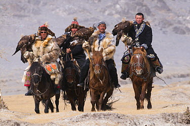 Golden Eagle (Aquila chrysaetos) group with hunters on way to a festival, Mongolia  -  David Tipling/ Biosphoto