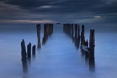 Old wharf at dawn, Saint Clair Beach, Dunedin, Otago, New Zealand  -  Colin Monteath/ Hedgehog House