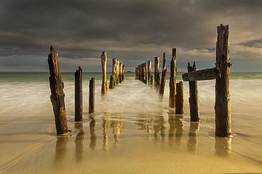 Old wharf at sunset, Saint Clair Beach, Dunedin, Otago, New Zealand  -  Colin Monteath/ Hedgehog House