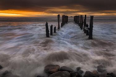 Old wharf at sunrise, Saint Clair Beach, Dunedin, Otago, New Zealand  -  Colin Monteath/ Hedgehog House