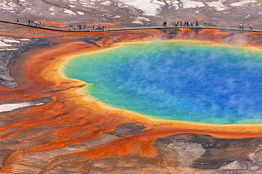 Tourists viewing Grand Prismatic Pool, Midway Geyser Basin, Yellowstone National Park, Wyoming  -  Ingo Arndt