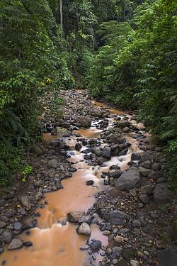 River flowing through rainforest, Costa Rica  -  Ingo Arndt