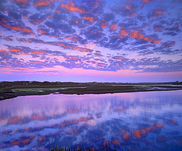 Wetland at sunrise, Elkhorn Slough, California  -  Tim Fitzharris