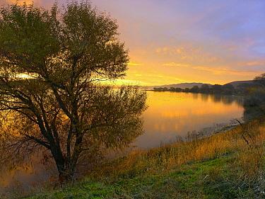 Tree on lake shore at sunset, San Luis Reservoir, California  -  Tim Fitzharris