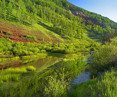Rico Mountains and Dolores River backwaters, Colorado  -  Tim Fitzharris