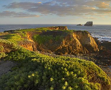Coastal rocks, Point Piedras Blancas, California  -  Tim Fitzharris