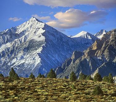 Mount Tom, Sierra Nevada, John Muir Wilderness, Inyo National Forest, California  -  Tim Fitzharris