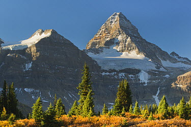Tundra and Mount Assiniboine, Mount Assiniboine Provincial Park, British Columbia, Canada  -  Kevin Schafer