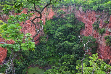 Sandstone sinkhole and rainforest, Buraco das Araras, Mato Grosso do Sul, Pantanal, Brazil  -  Kevin Schafer