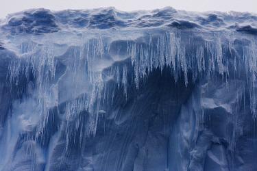 Icicles hanging from iceberg, Antarctic Peninsula, Antarctica  -  Hiroya Minakuchi