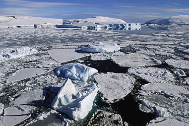 Sea ice, Weddell Sea, Antarctic Peninsula, Antarctica  -  Hiroya Minakuchi