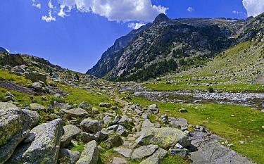Alpine meadow and river, Aiguestortes I Estany de Sant Maurici National Park, Pyrenees, Catalonia, Spain  -  Albert Lleal