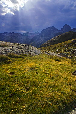 Alpine meadow, Aiguestortes I Estany de Sant Maurici National Park, Pyrenees, Catalonia, Spain  -  Albert Lleal