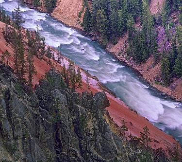 Yellowstone River, Yellowstone National Park, Wyoming  -  Tim Fitzharris