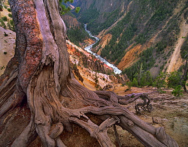 Yellowstone River flowing through Grand Canyon of Yellowstone, Yellowstone National Park, Wyoming  -  Tim Fitzharris