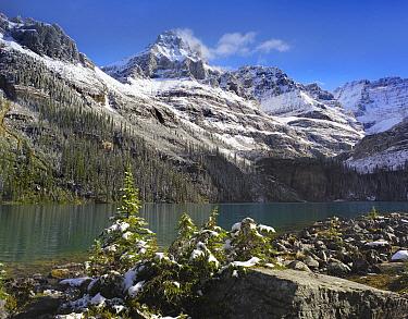 Mount Huber and Lake O'Hara, Yoho National Park, British Columbia, Canada  -  Tim Fitzharris