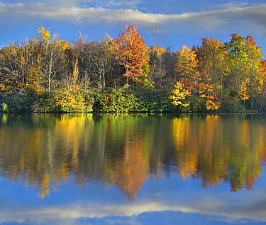 Deciduous forest in autumn along Price Lake, Blue Ridge Parkway, North Carolina  -  Tim Fitzharris