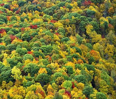 Deciduous forest in autumn, Blue Ridge Parkway, North Carolina  -  Tim Fitzharris
