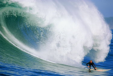 Evan Slater rides a huge wave at Mavericks, Half Moon Bay, California  -  Bob Barbour