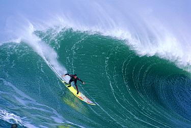 Peter Mell rides a wave at Mavericks, Half Moon Bay, California  -  Bob Barbour