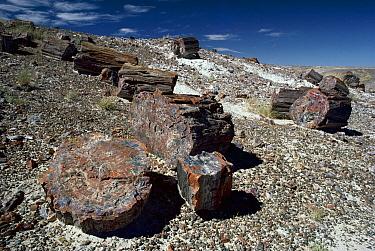 Petrified logs, Petrified Forest National Park, Arizona  -  Michael & Patricia Fogden