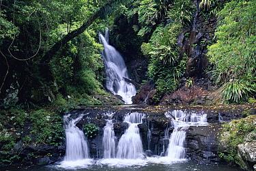 Elabana Falls, subtropical rainforest, Lamington National Park, Queensland, Australia  -  Michael & Patricia Fogden