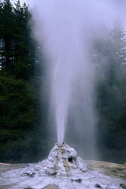 Lady Knox Geyser in Waiotapu thermal basin, Rotorua, North Island, New Zealand  -  Michael & Patricia Fogden