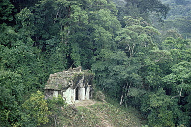 Mayan ruins at Palenque, the Temple of the Sun, surrounded by rainforest, Chiapas, Mexico  -  Michael & Patricia Fogden
