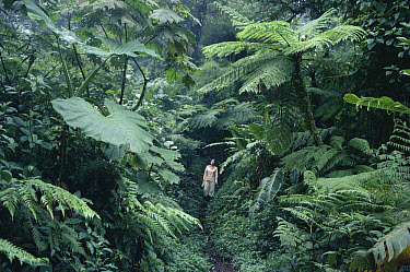 Brilliant trail with hiker, Monteverde Cloud Forest Reserve, Costa Rica  -  Michael & Patricia Fogden