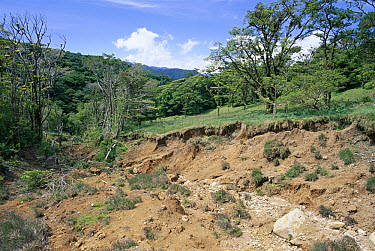 Erosion damage caused by hurricane Mitch, Monteverde Cloud Forest Reserve, Costa Rica  -  Michael & Patricia Fogden