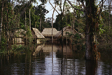 Huts in flooded forest, Cocha Imuya, Amazonian Ecuador  -  Michael & Patricia Fogden