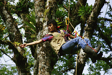 Dr Nalini Nadkarni looking at epiphytes in Fig tree, Monteverde Cloud Forest Reserve, Costa Rica  -  Michael & Patricia Fogden