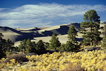 Great Sand Dunes National Monument, Colorado  -  Michael & Patricia Fogden