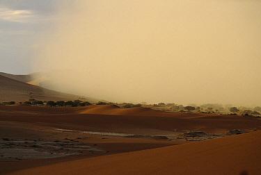 Sand storm over dunes, Sossusvlei, Namib-Naukluft National Park, Namibia  -  Michael & Patricia Fogden