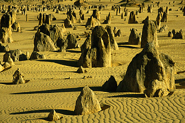 The Pinnacles, Nambung National Park, Western Australia  -  Michael & Patricia Fogden