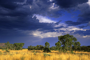 Storm over the MacDonnell Ranges during the wet season, Northern Territory, Australia  -  Michael & Patricia Fogden